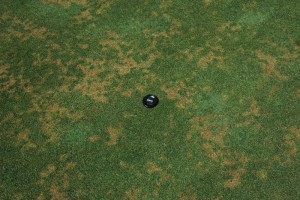anthracnose on putting green