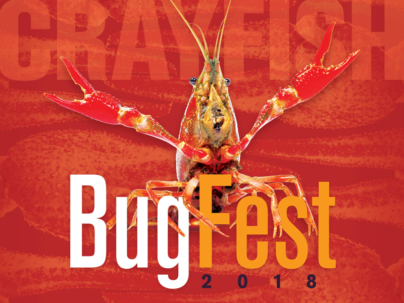Bugfest flyer image