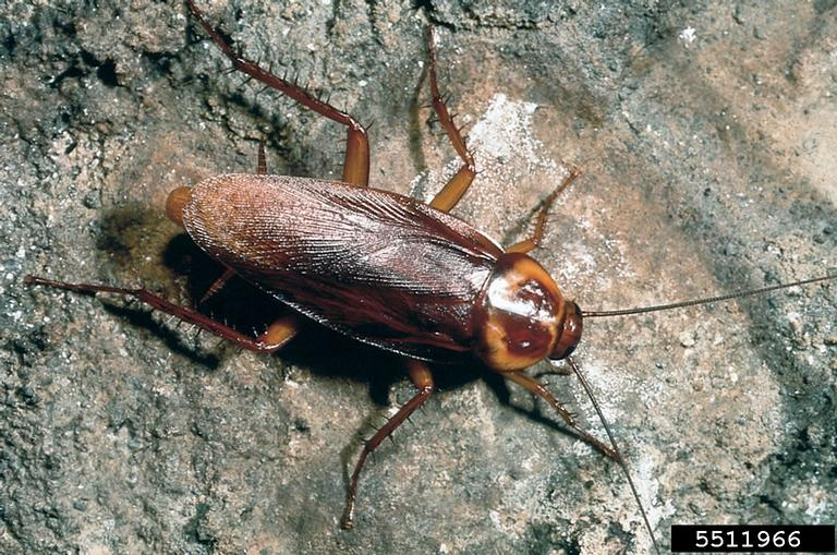Image of a roach
