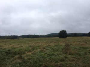pasture on a cloudy day