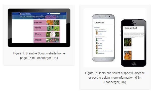 Bramble website screenshot image