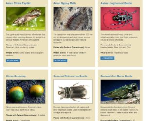 USDA APHIS List of Invasive Species