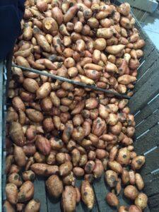 Black rot of Sweetpotato